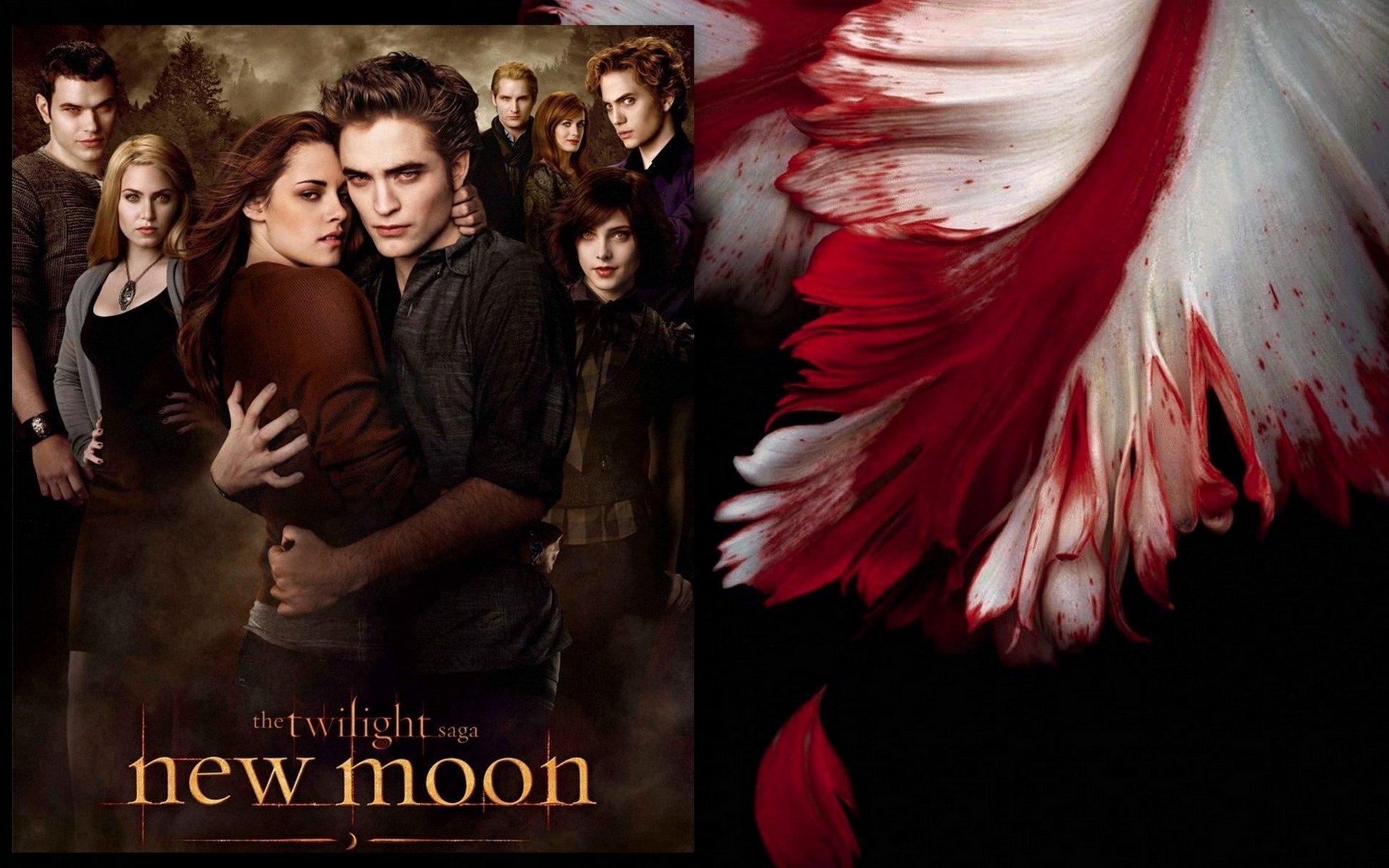 New-Moon-Wallpaper-2-twilight-series-8394252-1920-1200 - сумреки обои